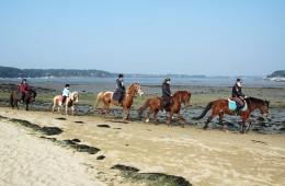 Balade à cheval et poney sur la plage